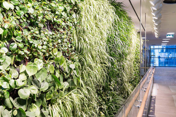 Lendlease's living wall.