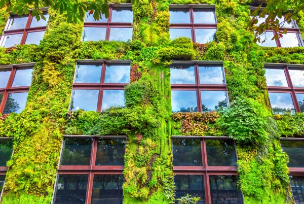 Green infrastructure needed to future-proof the city