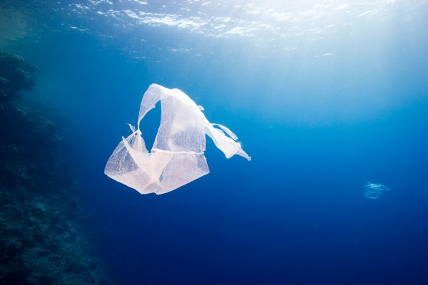 Seabin launches share program to combat ocean pollution